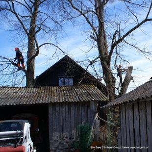 koku kopšana un bīstamo koku zāģēšana