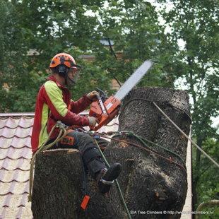 bīstamo koku zāģēšana Rīgā