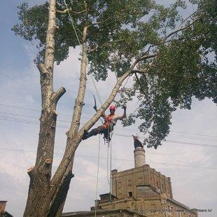 bīstamo koku zāģēšana