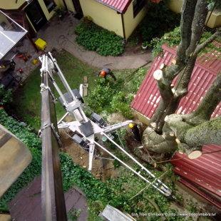 bīstamo koku zāģēšana ar pācēlāju Rīgā