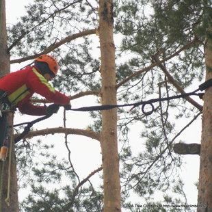 Koka drošības sistēma Cobra uzstādīšana