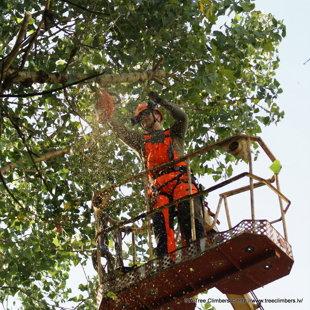 koku kopšana ar pacēlāju