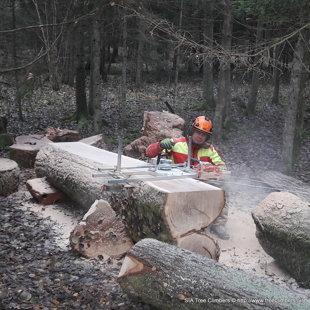 mežā kritušais ozols tiek sazāģēts dēļos